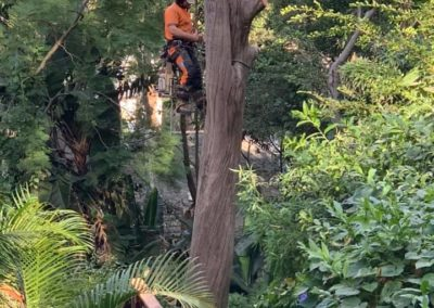 aaron tree pruning